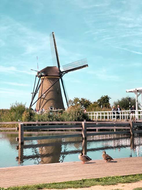 wild ducks and bird watching in netherlands