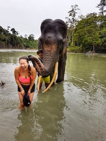 being kissed by an asian elephant in a sanctuary in thailand