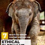 pinterest image to save ways to visit ethical elephant sanctuary