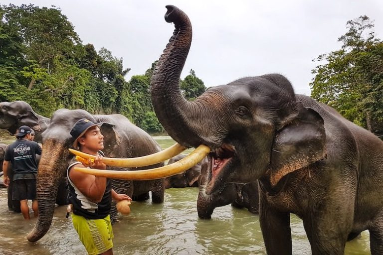 7 Ways To Know You're Visiting an Ethical Elephant Sanctuary