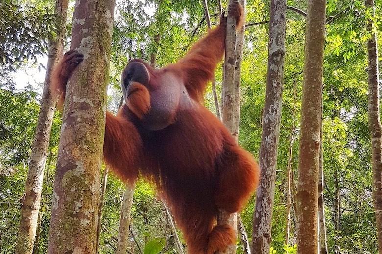 Ultimate Jungle Trekking in Bukit Lawang Guide