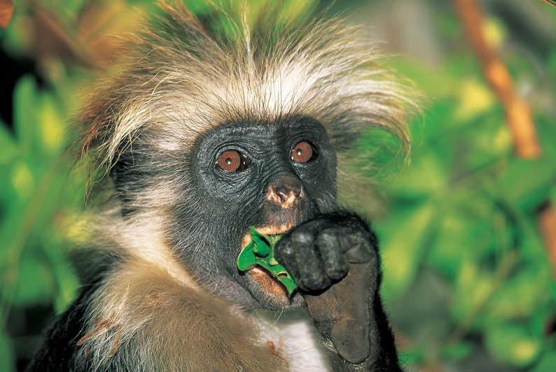 zanzibar wildlife tours in jozani forest