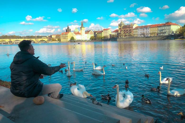 feeding swans and ducks at strelecky ostrov is one of the non touristy things to do in praha