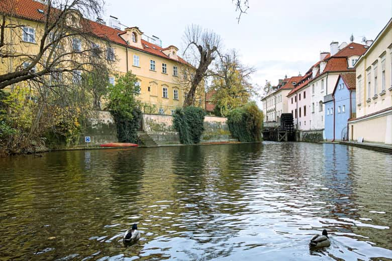 ducks swimming in the venice of prague is a great thing to do with kids in prague