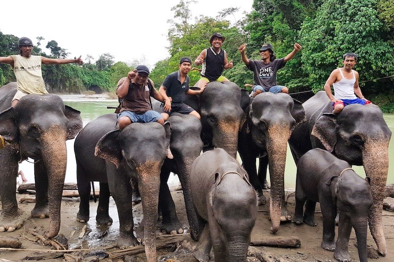 elephants and their mahouts from the tangkahan elephant sanctuary in sumatra indonesia